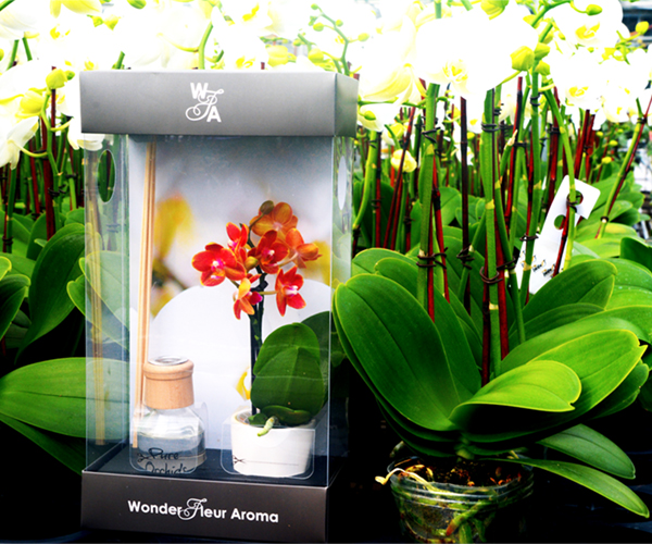 wonder-fleur-reed-diffuser-mini-pure=beauty-orchids-plainview-growers-1-800-flowers-02