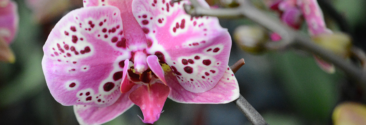 12-incredible-facts-orchids-pure-beauty-plainview-growers