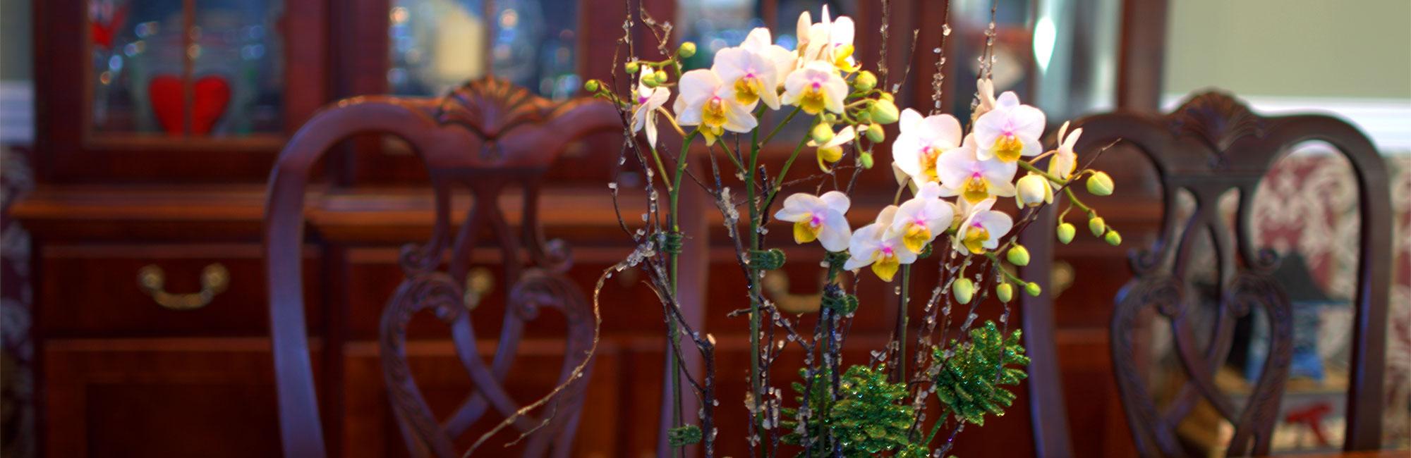 plainview-pure-orchids-pompton-plains-new-jersey-lifestyle