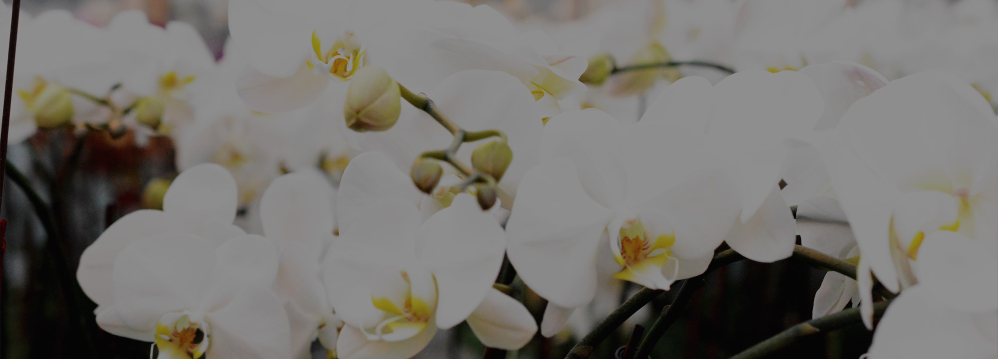 The Anatomy Of Your Orchids - Plainview Pure