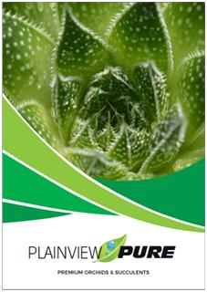 plainview-pure-premium-orchids-succulents-growers-new-jersey