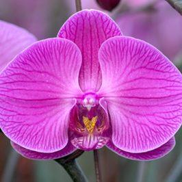 plainview-pure-orchids-mudflower-media-web-graphic-design-saint-augustine-florida