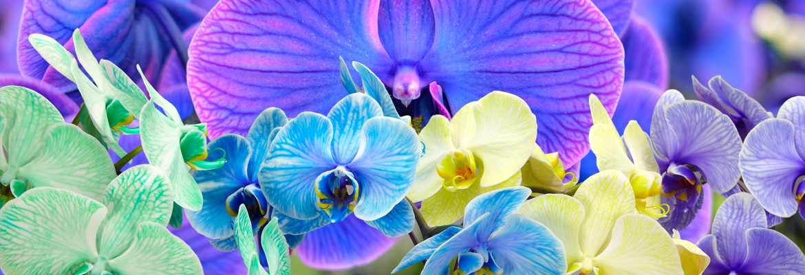 Colorfuze Orchids Are Blooming In Kaleidoscope Colors