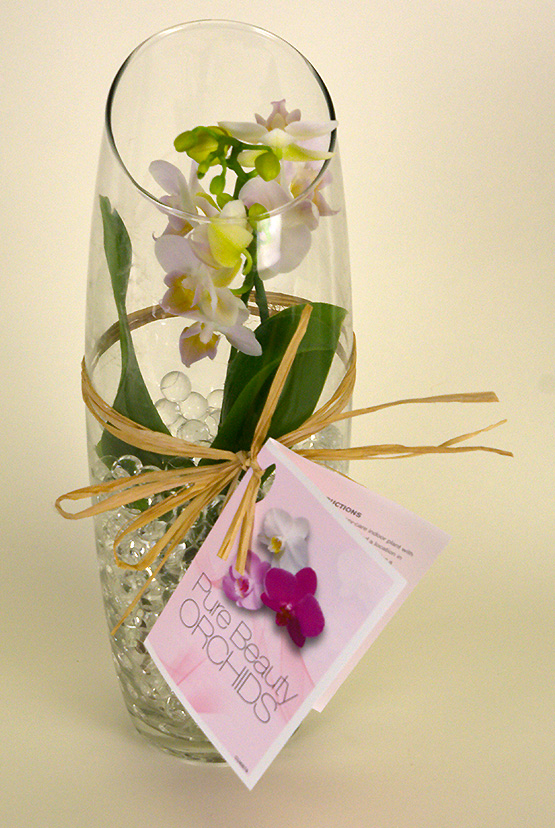 pure-beauty-orchids-plainview-growers-pompton-plains-new-jersey-micro-mini-yellow-vase