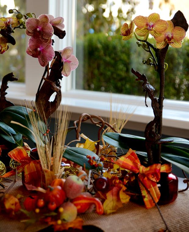 pure-beauty-orchids-fall-arrangement-1-800-flowers