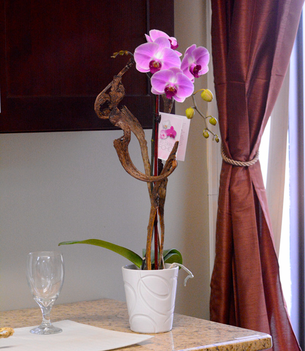 pure-beauty-orchids-just-add-moss-ice-plainview-growers