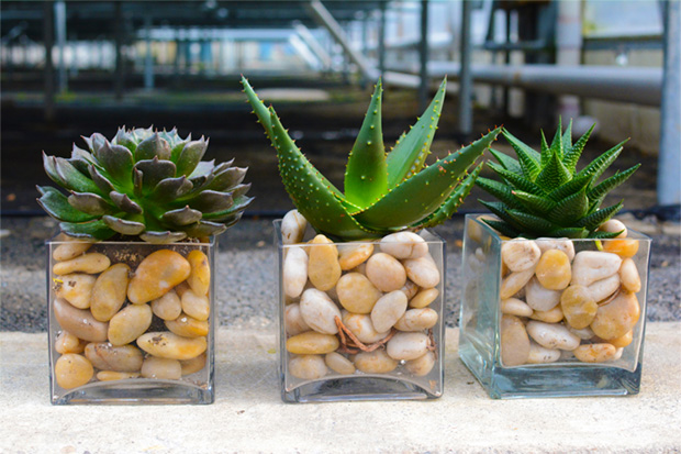 pure-succulents-plainview-growers-beauty-orchids-lifestyle-rocks-woods-pearl