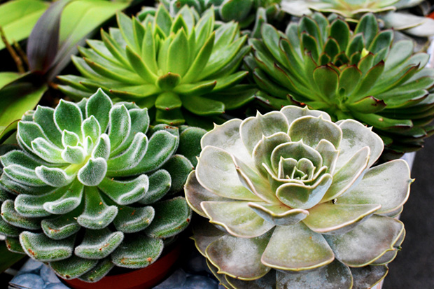 pure-succulents-plainview-growers-beauty-orchids-lifestyle